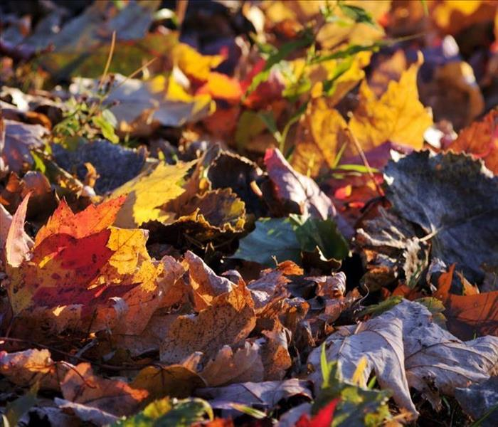 Multicolored, autumn leaves covering the ground.