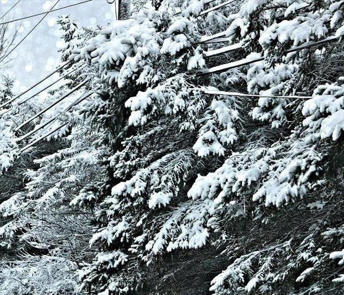 Snow covered pine tree branches are tangled in power lines.