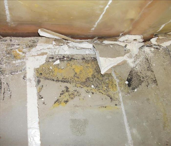 Mold Remediation Questions about Mold?