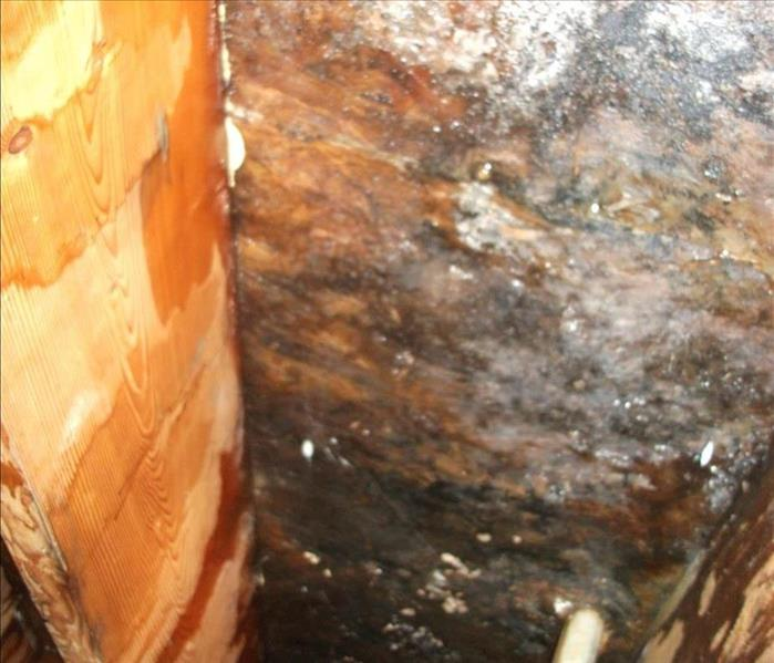 Mold Remediation Mold and Indoor Air Quality